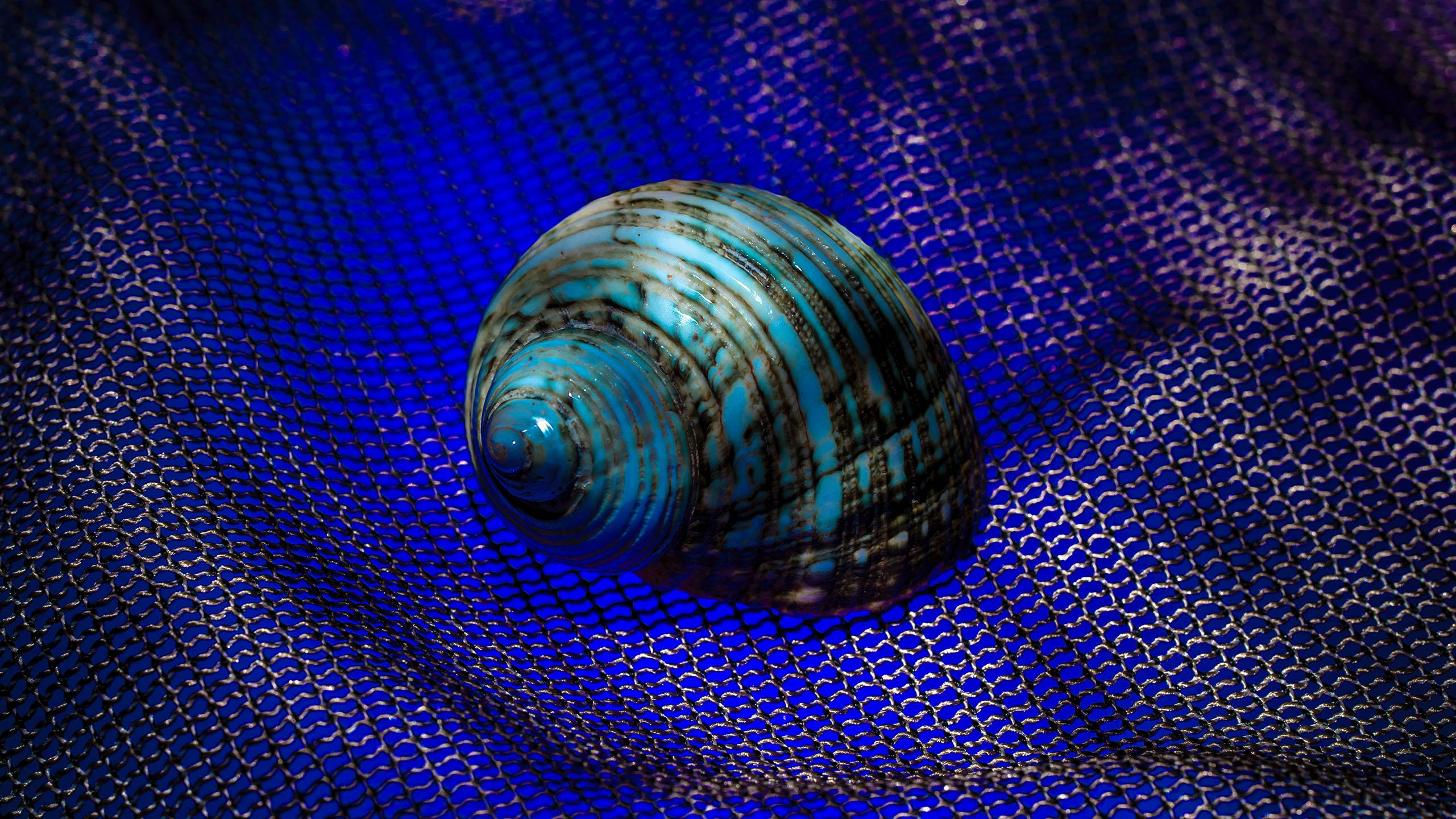 Sea Snails 10