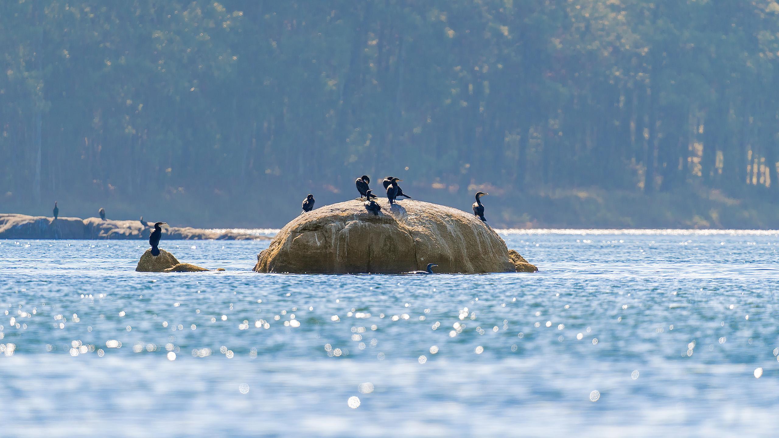 cormoranes en rocas
