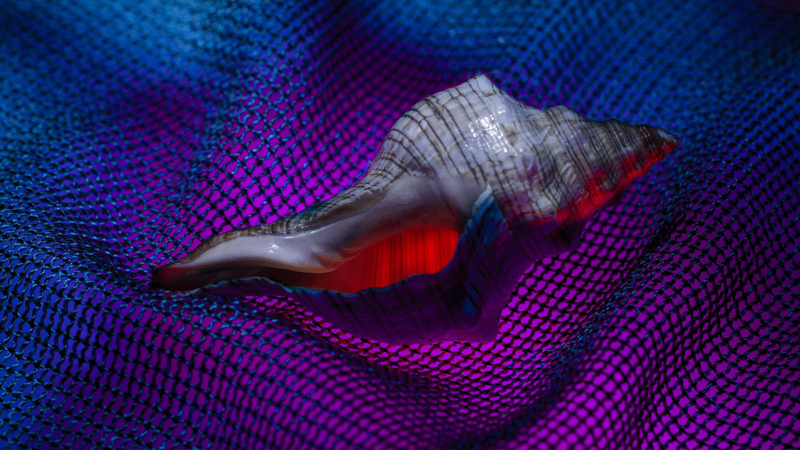 Sea Snails 3